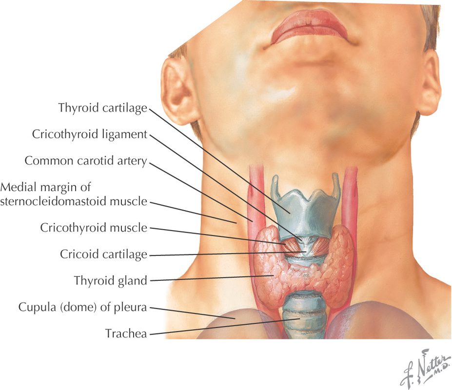 Inside the Larynx - Voice Science Works